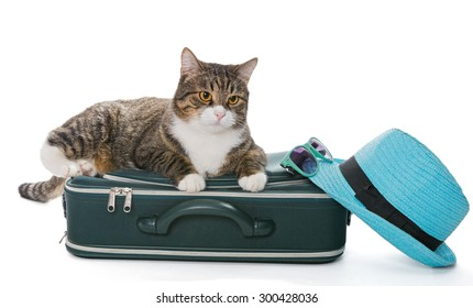 Serious grey cat sitting on a green suitcase, isolated on white