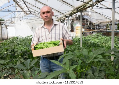 Serious man horticulturist holding crate with green okra in  hothouse