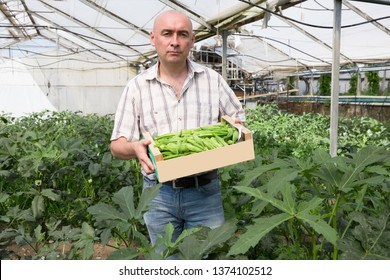 Serious man horticulturist holding crate with green bamia in  greenhouse