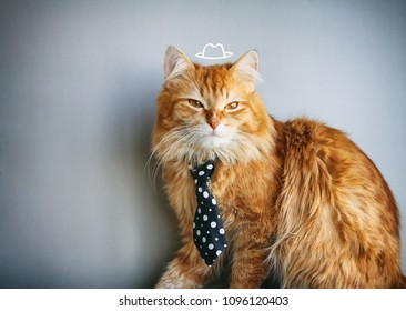 serious red cat in tie, painted hat, sits on gray background