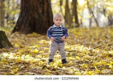 Serious smart toddler standing on autumn leaves carpet.