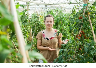 Serious woman gardener attentively looking tomatoes seedlings  in  hothouse