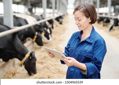 Serious young female worker of animal farm in uniform using touchpad to find information about new breed of milk cows