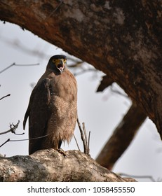 Serpent Eagle had her eyes lit up, showing her Tounge