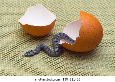The serpent tempter in an eggshell on a colored background.