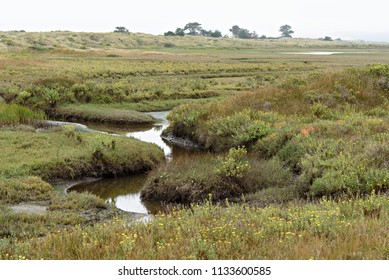 A Serpentine Path of Water Through the Coastal Meadow