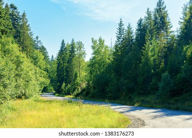 serpentine winding through country forest. beautiful scenery on a bright summer day. explore back country - travel by car concept. transportation background