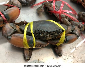 serrated mud crabs, also known as  mangrove crab and Samoan crab, with giant size and dense meat content, its shell color varies from a deep, mottled green to very dark brown.