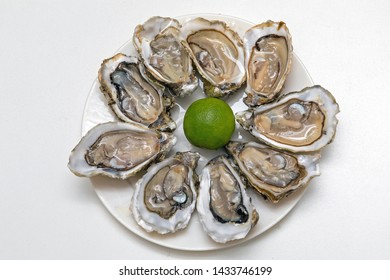 Served Opened Fresh Oysters Seafood at Plate