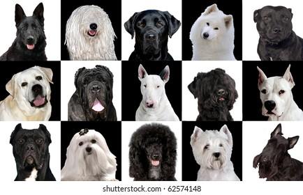 Set of 15 black & white dog breeds in studio