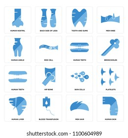 Set Of 16 icons such as Human Skin, Men Hair, Blood Transfusion, Liver, Platelets, Nostril, Ankle, Teeth, web UI editable icon pack, pixel perfect