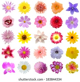 Variety Flowers Images Stock Photos Vectors Shutterstock