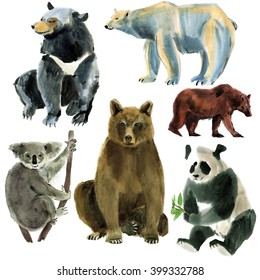 Set of animals bears. Watercolor illustration in white background.