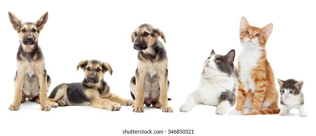 set of animals, isolated on white background