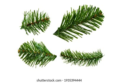 Set of artificial spruce branches on a white background