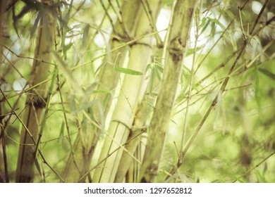 set of bamboo trees in a jungle
