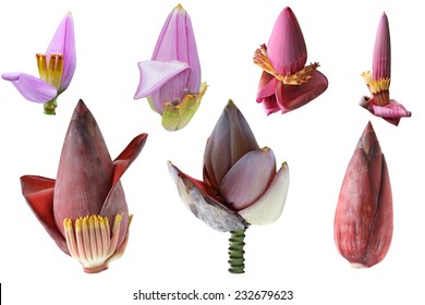Set of banana flower isolated on white background