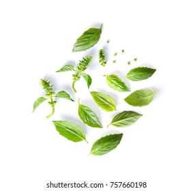 set of basil leaf isolated on white background