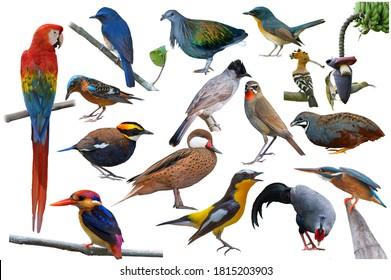 Set of beautiful birds in Thailand