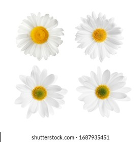 Set of beautiful chamomile flowers on white background, top view