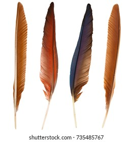 set of beautiful and colorful bird feathers isolated on white background