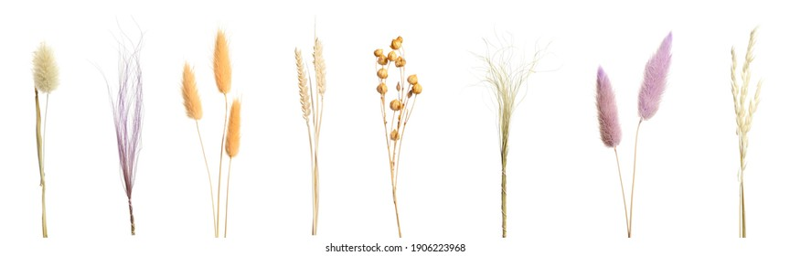 Set with beautiful decorative dry flowers on white background, banner design  - Shutterstock ID 1906223968