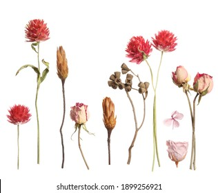 Set with beautiful dry flowers on white background