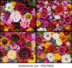 set of beautiful floral backgrounds from garden flowers, top view. Bouquet.