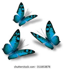 Set of beautiful flying  blue butterflies on white background with nice soft shadows, exotic butterflies