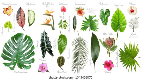 Set of beautiful tropical leaves and flowers on white background