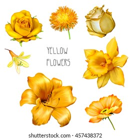 Set of beautiful yellow, orange flowers: bright Rose, aster Flower, iris and lily flower, Daffodil flower or narcissus, poppy flower isolated on white background