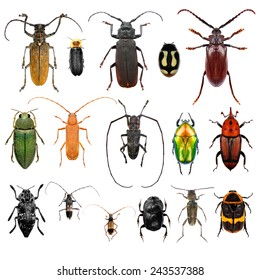 Set of beetles isolated on a white background