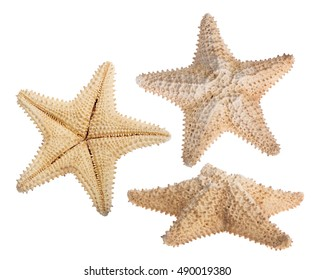 set of beige starfishes isolated on white background