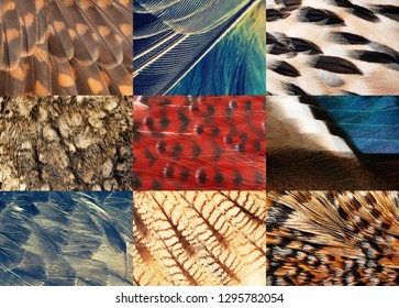set of bird plumage textures, macro photo, abstract background