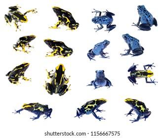Set of blue dyeing dart frog Dendrobates tinctorius isolated on white