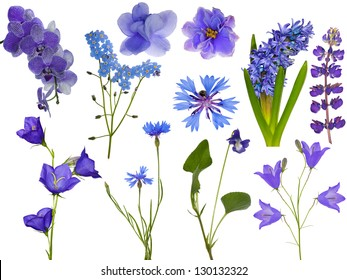 set of blue flowers isolated on white background