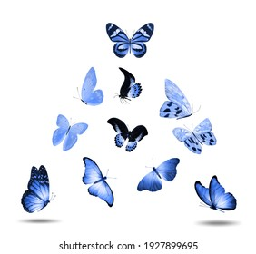 set of blue flying butterflies isolated on a white background