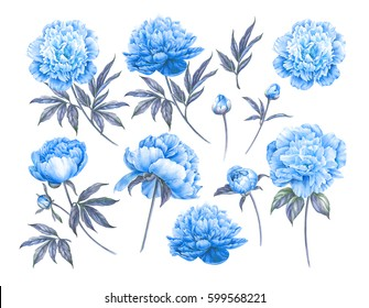 Set of botanic floral elements. Spring or summer design for invitation, wedding or greeting cards. Set of blue flowers isolated over white background.