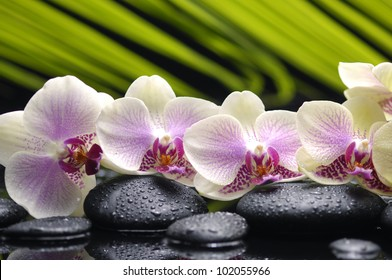 Set of branch orchid with stones- palm leaf background