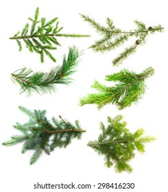 Set of branches of coniferous trees isolated on white background. Conifer branches close up for your design. Spruce, pine, larch, cedar, blue pine and fir.