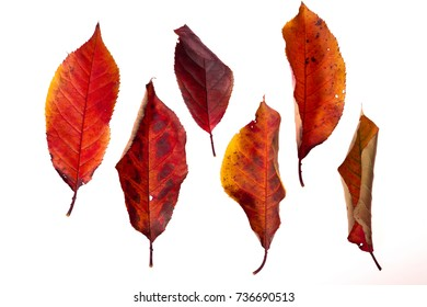 Set of bright autumn leaves isolated on white