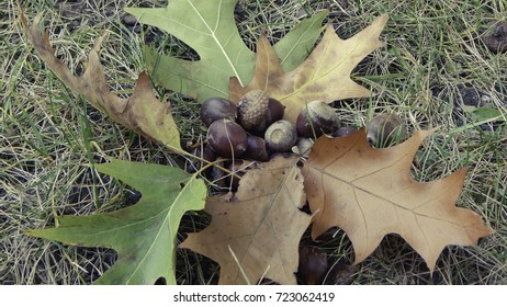 Set of brown, yellow and green leaves with chestnuts on autumn grass