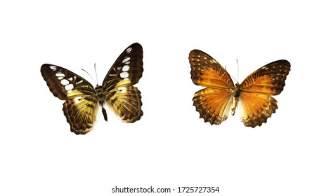 Set of butterflies isolated on white