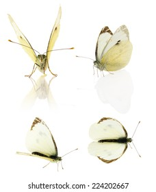 Set of cabbage butterfly isolated on the white background