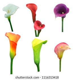A set of Calla lily flowers in multiple colors isolated on white background