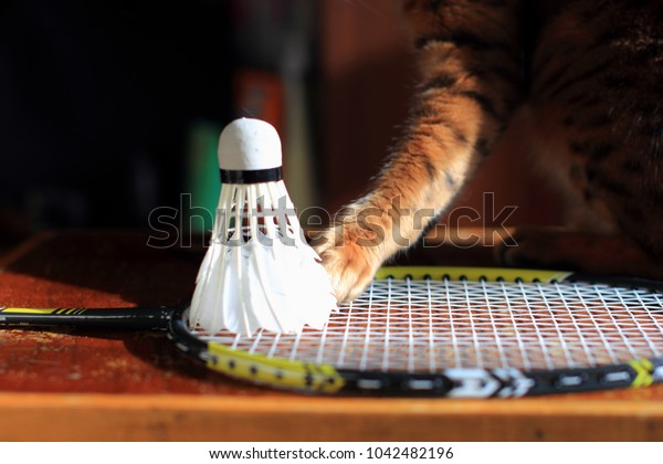 Set Cat playing Badminton shuttlecock. Racket on worm wood background. Morning sun, shadows. Close up.
