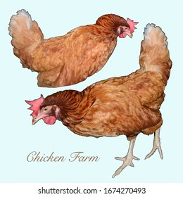 Set of chicken isolated on blue