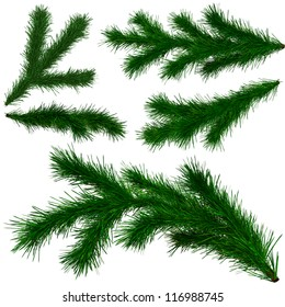 set of Christmas tree fir branches on white background