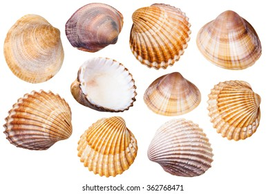 set of clam mollusc shells isolated on white background - Shutterstock ID 362768471
