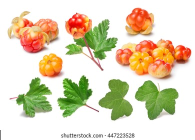 Set of cloudberries (Rubus Chamaemorus) and leaves. Design elements. Clipping paths, berries and shadow separated, infinite depth of field